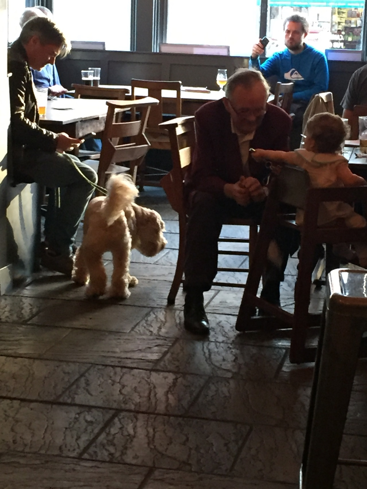 Dog and Baby in the Pub in Highgate